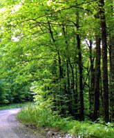 forest glidden